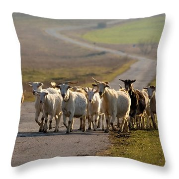 Goats Walking Home Throw Pillow