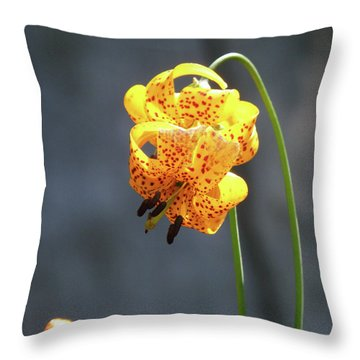 God's Classic Work In The Wilderness Throw Pillow