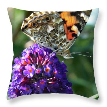 God's Design - Painted Lady Throw Pillow