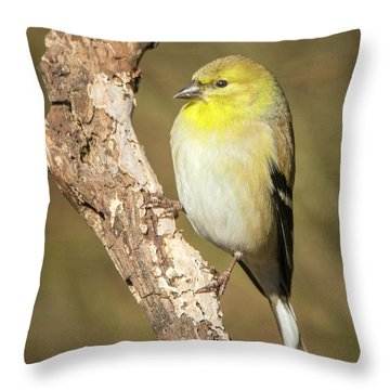 Throw Pillow featuring the photograph Gold Finch by David Waldrop