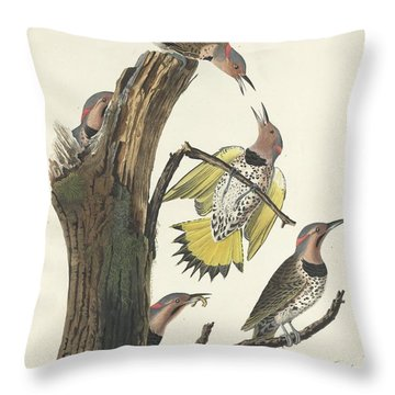 Gold-winged Woodpecker Throw Pillow