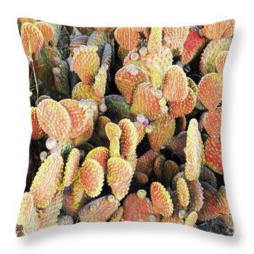 Throw Pillow featuring the photograph Golden Beaver Tail Catcus by Linda Phelps