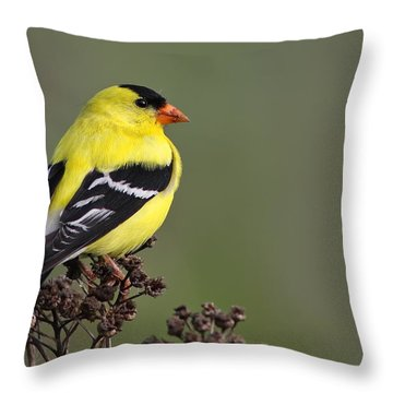 Golden Bird Throw Pillow by Mircea Costina Photography
