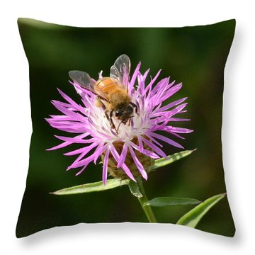 Golden Boy-bee At Work Throw Pillow by David Porteus