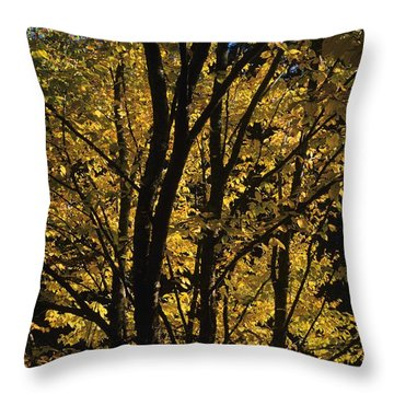 Golden Colors Of Autumn In New England  Throw Pillow by Erin Paul Donovan