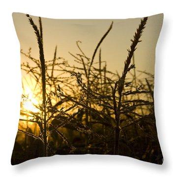 Golden Corn Throw Pillow