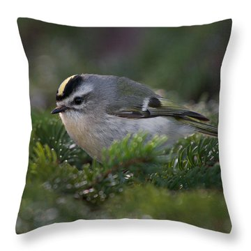 Golden-crowned Kinglet Throw Pillow by Timothy McIntyre