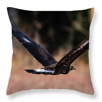 Golden Eagle Flying Throw Pillow by Torbjorn Swenelius