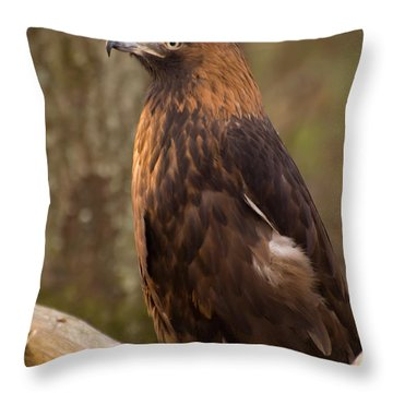 Golden Eagle Resting On A Branch Throw Pillow by Chris Flees