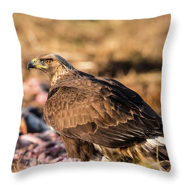Golden Eagle's Back Throw Pillow by Torbjorn Swenelius