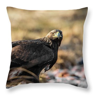 Golden Eagle's Glance Throw Pillow by Torbjorn Swenelius
