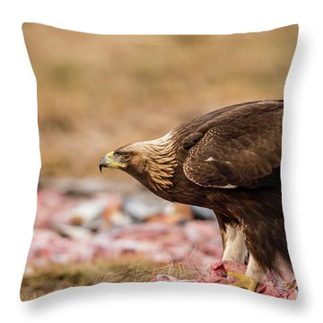 Golden Eagle's Profile Throw Pillow by Torbjorn Swenelius