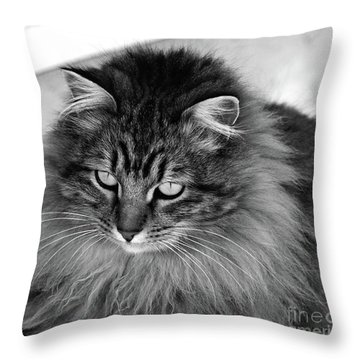 Golden Eyes Two Throw Pillow by Shari Nees