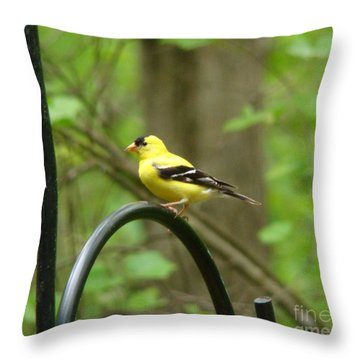 Golden Finch Throw Pillow
