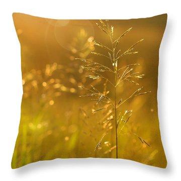 Golden Glow Throw Pillow by Sandra Cunningham