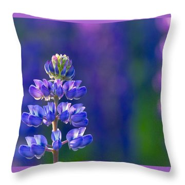 Golden Hour Lupine Throw Pillow by Mary Amerman