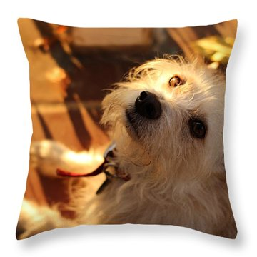 Throw Pillow featuring the photograph Golden by Kevin Ashley