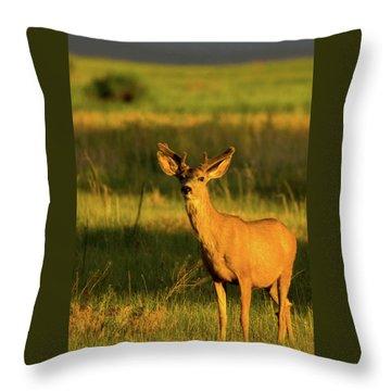 Golden Light Buck II Throw Pillow