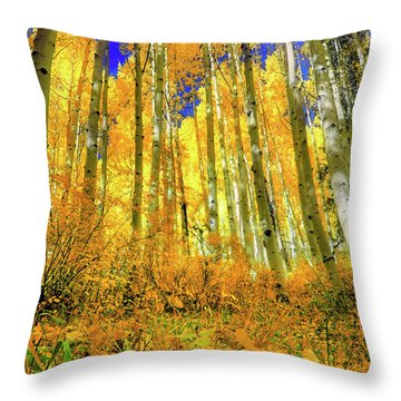 Throw Pillow featuring the photograph Golden Light Of The Aspens - Colorful Colorado - Aspen Trees by Jason Politte
