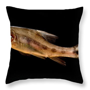 Golden Line Barbel Throw Pillow