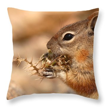 Golden-mantled Ground Squirrel Eating Prickly Spine Throw Pillow by Max Allen