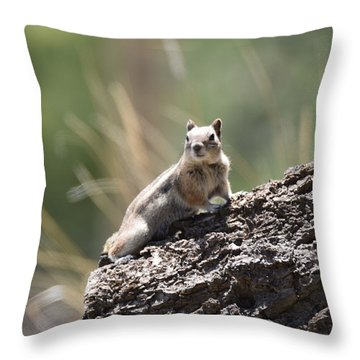Throw Pillow featuring the photograph Golden Mantled Ground Squirrel by Margarethe Binkley