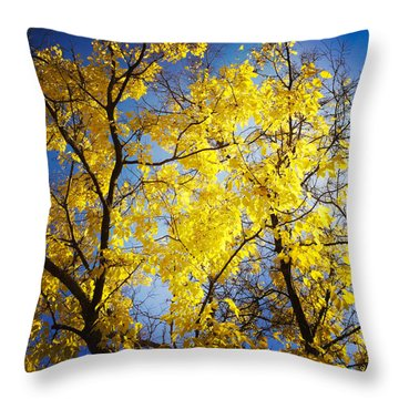 Golden October Tree In Fall Throw Pillow