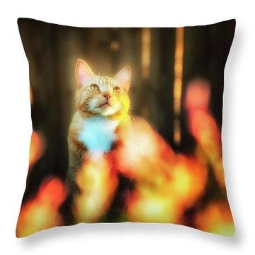 Golden Orange Tabby Throw Pillow