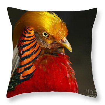 Throw Pillow featuring the photograph Golden Ornamental Pheasant by Debbie Stahre