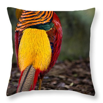 Golden Pheasant Throw Pillow