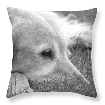 Golden Retriever Dog In The Cool Grass Monochrome Throw Pillow by Jennie Marie Schell