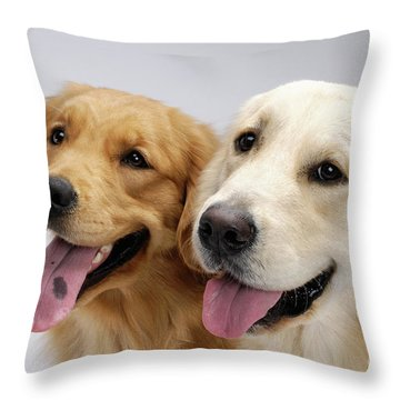 Golden Retrievers Throw Pillow by Oleksiy Maksymenko