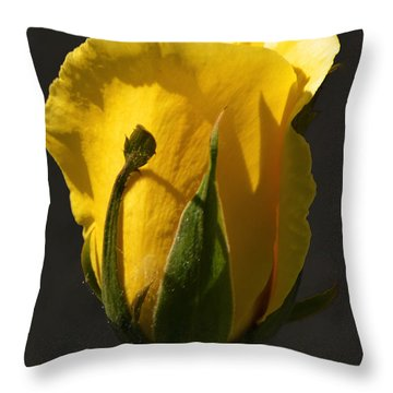 Golden Rose Throw Pillow by Kathleen Stephens