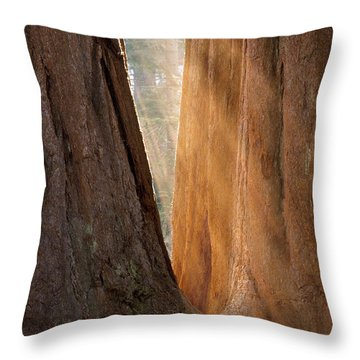 Golden Sequoia Throw Pillow