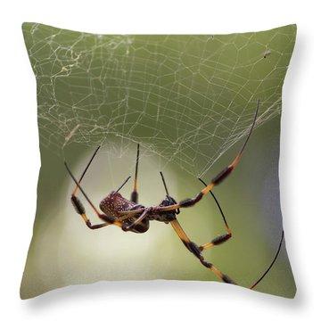 Golden-silk Spider Throw Pillow