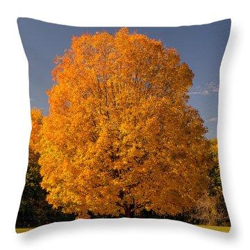 Golden Tree Of Autumn Throw Pillow