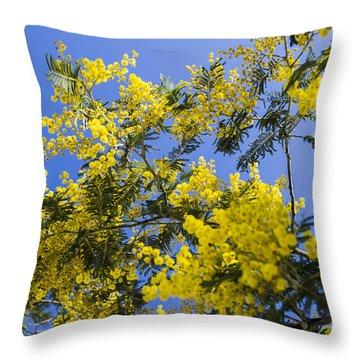 Throw Pillow featuring the photograph Golden Wattle by Angela DeFrias