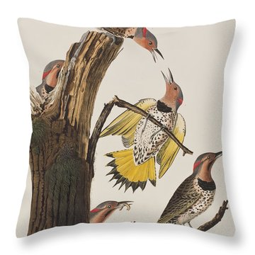 Golden-winged Woodpecker Throw Pillow