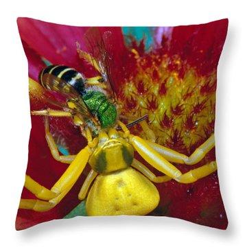 Goldenrod Crab Spider Misumena Vatia Throw Pillow