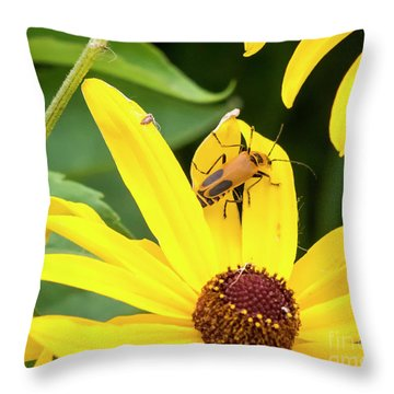 Throw Pillow featuring the photograph Goldenrod Soldier Beetle by Ricky L Jones