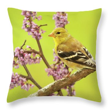 Goldfinch Among Redbud Throw Pillow by Max Allen