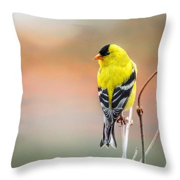 Goldfinch At Sunrise Throw Pillow by Susan Capuano