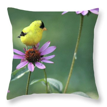 Goldfinch On A Coneflower Throw Pillow
