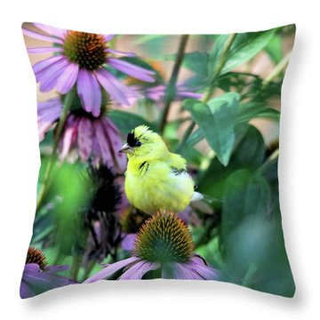 Goldfinch On Coneflowers Throw Pillow