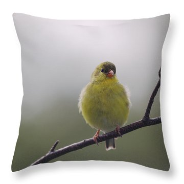 Throw Pillow featuring the photograph Goldfinch Puffball by Susan Capuano