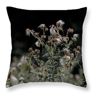 Goldfinch Sitting On A Thistle Throw Pillow
