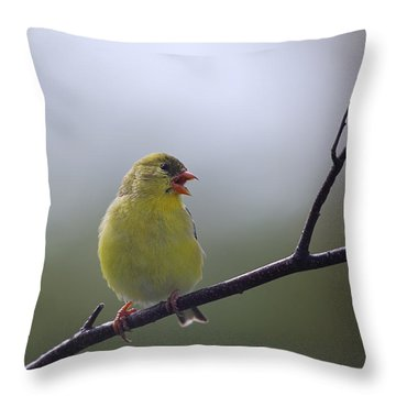 Throw Pillow featuring the photograph Goldfinch Song by Susan Capuano