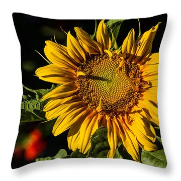 Good Morning Throw Pillow by Alana Thrower