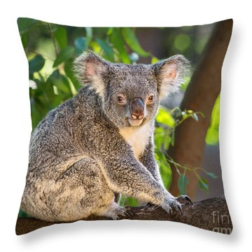 Good Morning Koala Throw Pillow