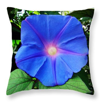 Good Morning Throw Pillow by Sue Melvin